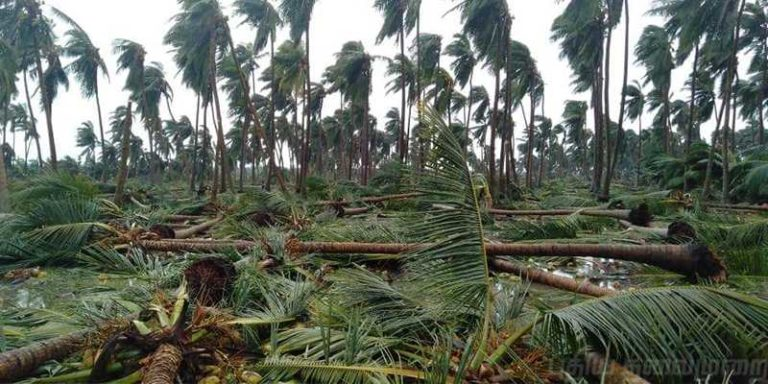 cyclone gaja - relief program via race institute - make your contribution (3)
